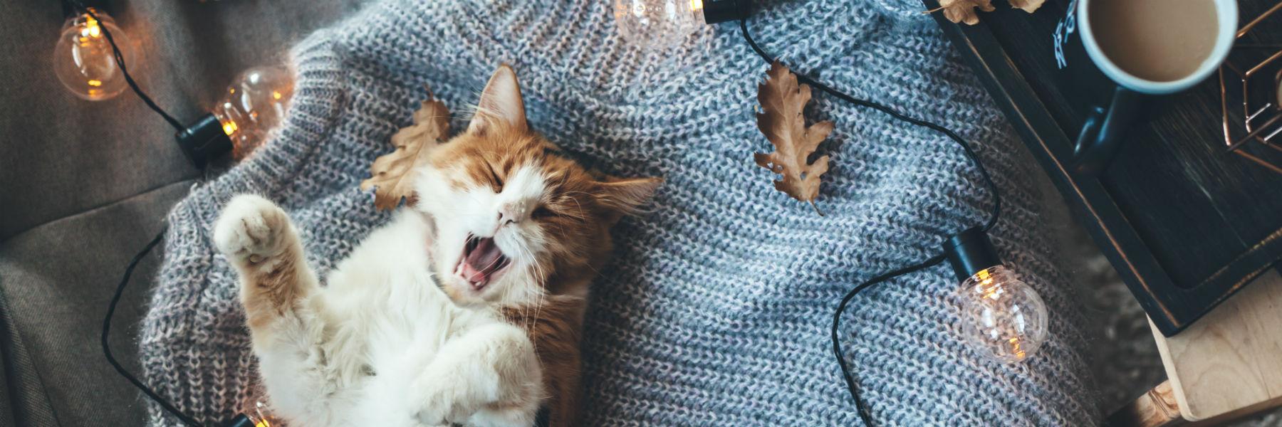 miedzynarodowy dzien kota