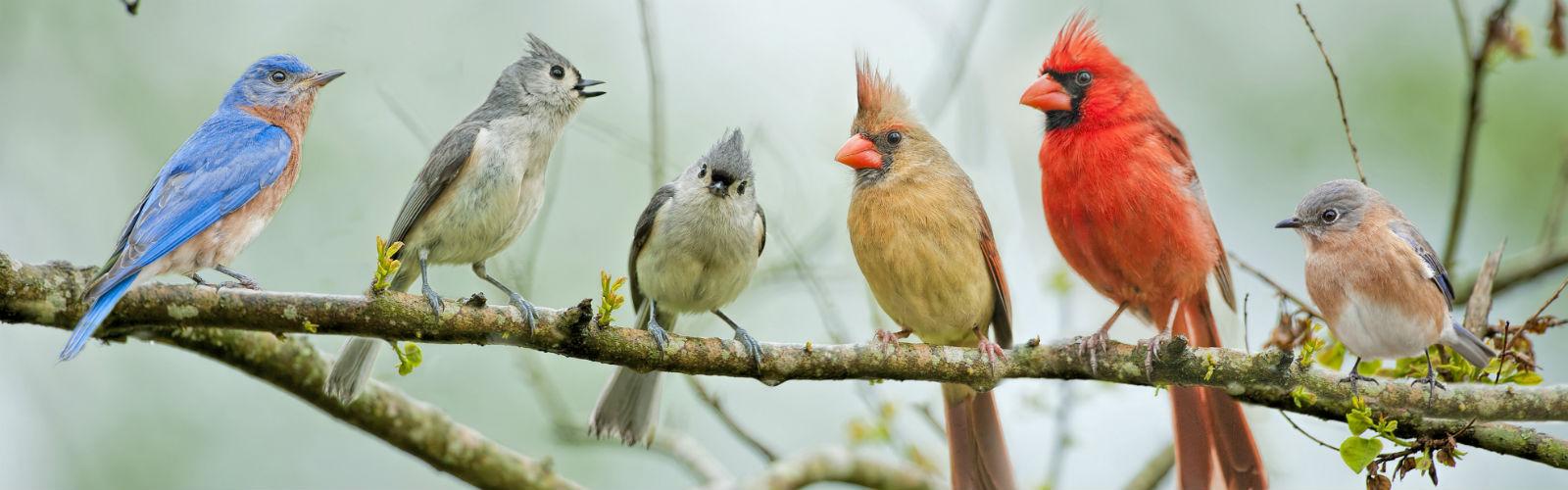 dzień ptaków