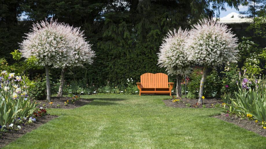 Rośliny Szczepione Na Pniu Hit Małych Ogrodów Allegropl