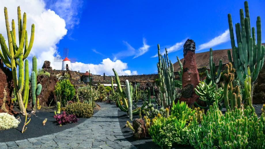 Záhrada kaktusu lanzarote