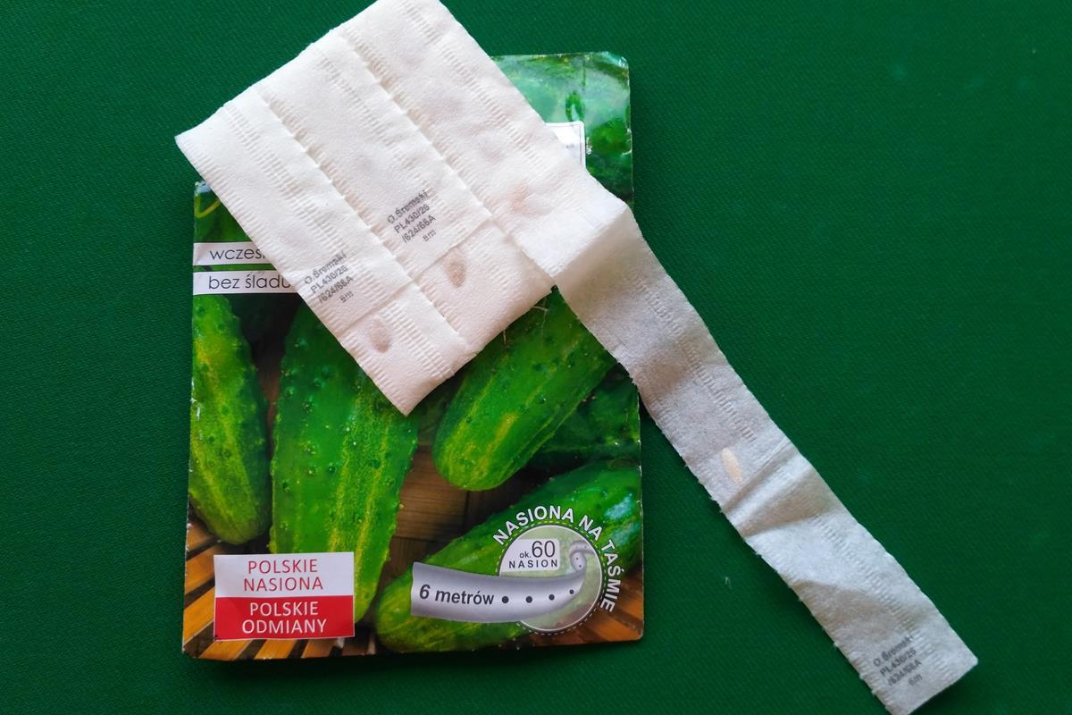 semená na páske 3