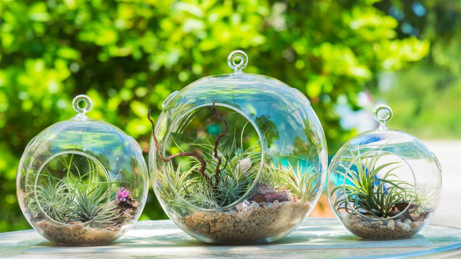 Rośliny Idealne Do Ogrodu W Szkle Allegropl