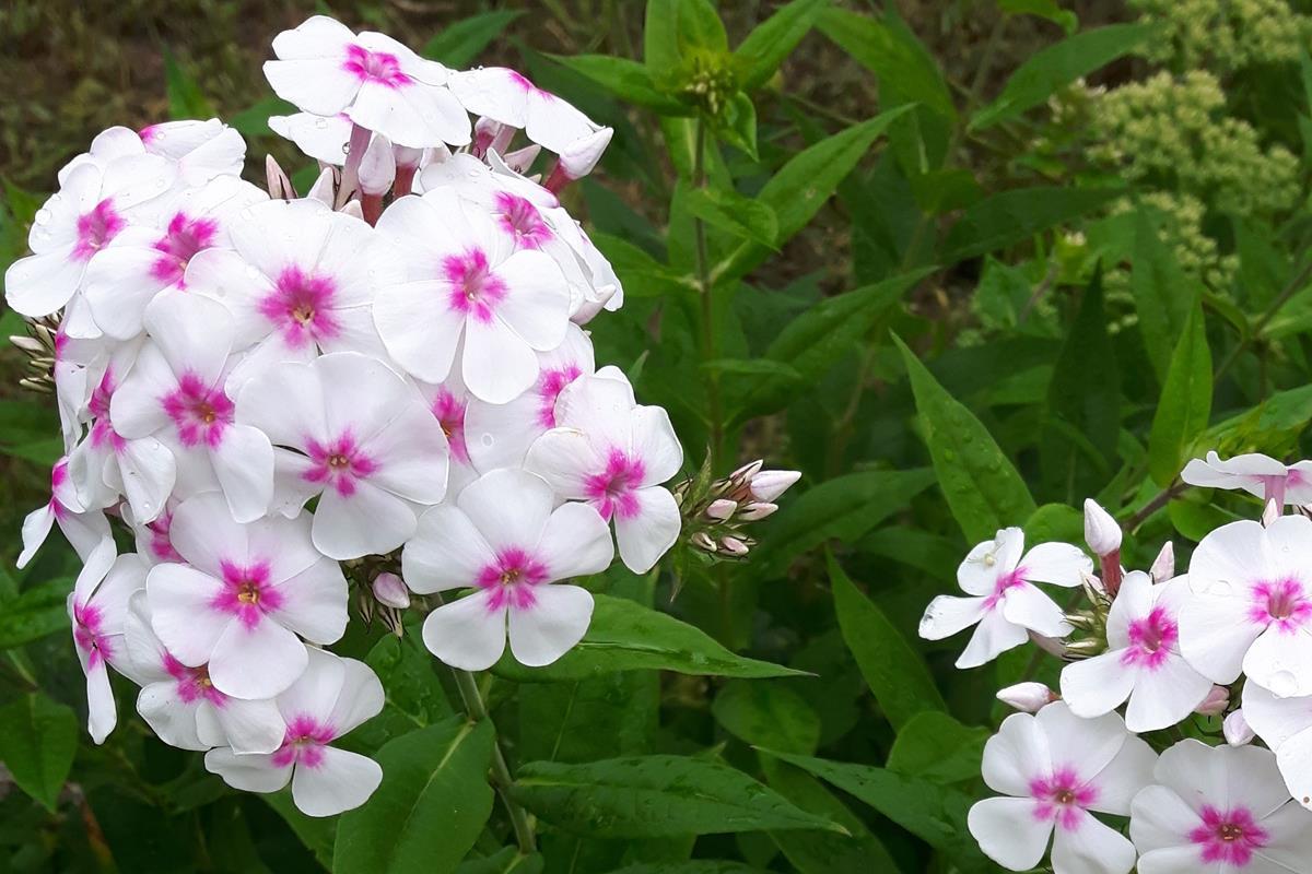Wysiewamy Kwiaty Jednoroczne Ktore W Pojemnikach A Ktore Do Gruntu Allegro Pl
