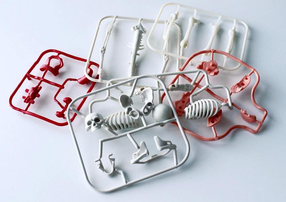 prvky pre zostavenie skeletu