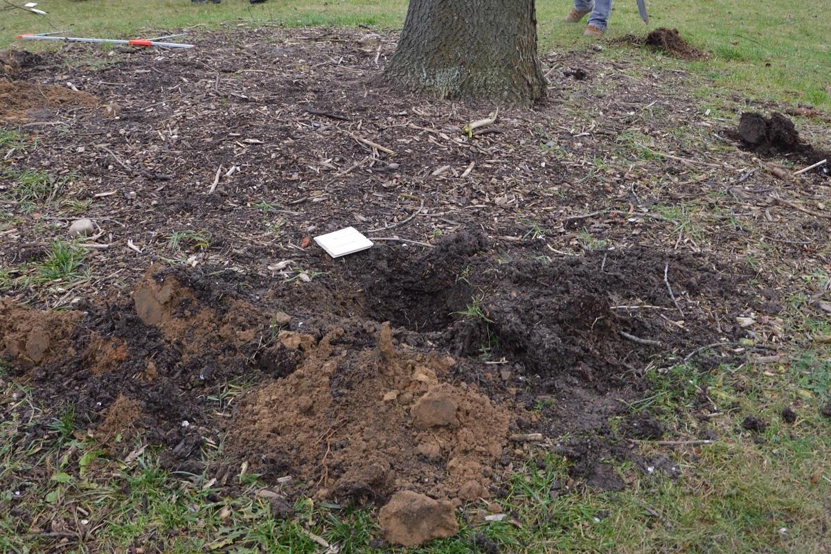 štúdia životaschopnosti stromu v koreňovej zóne