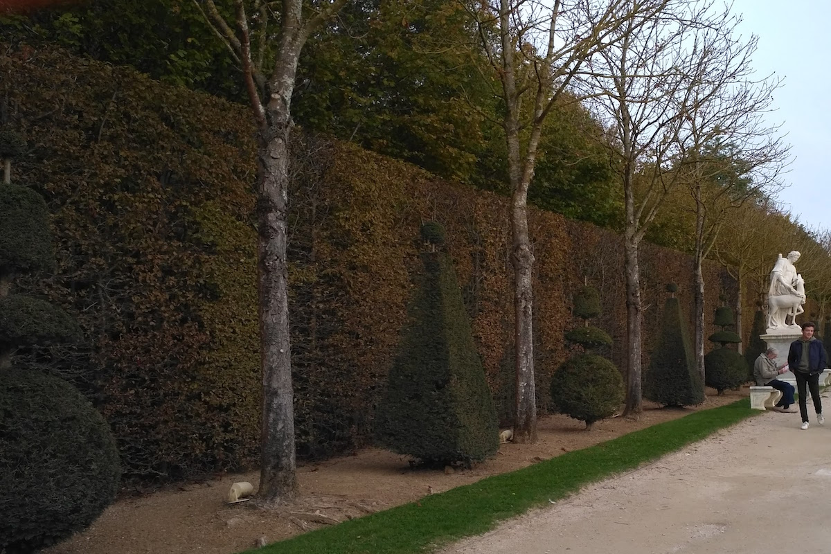 hedge and topiary